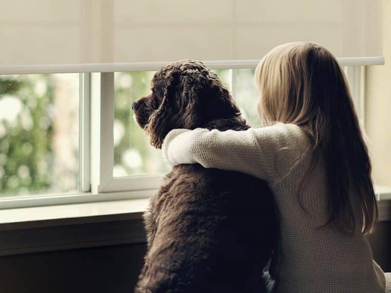 Niña abranzdo un perro mientras mira a través dena persianas Pentagrama con tejidos libres de sustancias nocivas